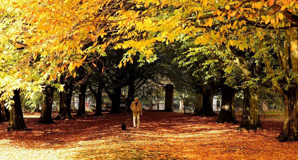 عکس های شگفت انگیز و رویایی از پاییز