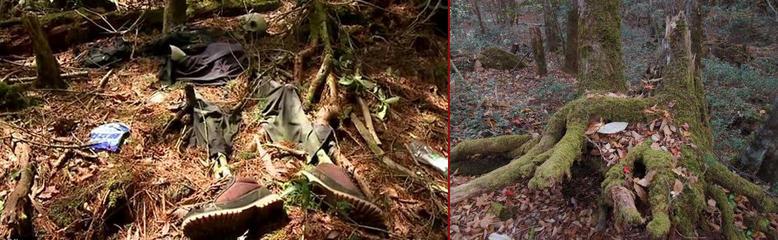 ارواح ناآرام و سرگردان در جنگل خودکشی ژاپن + تصاویر