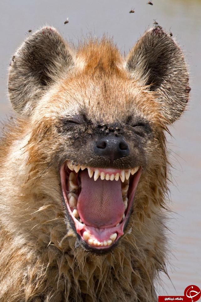 خنده دارترین و جدیدترین عکس ها و تصاویر حیوانات و حیات وحش 2016