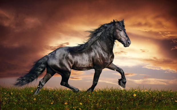 طالع بینی چینی متولدین سال اسب