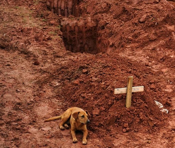 سگی که دو روز متوالی بعد از فوت صاحبش، کنار مزار او نشست