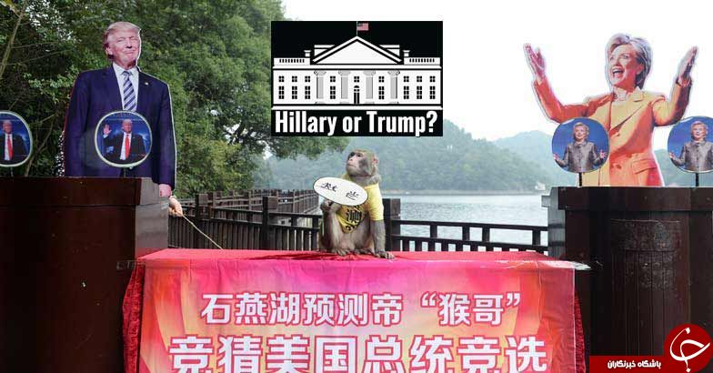 پیش بینی نتیجه انتخابات آمریکا توسط میمون افسانه ای + عکس