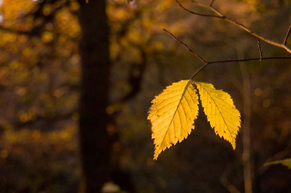 عکس های خیره کننده و زیبا از طبیعت پاییزی