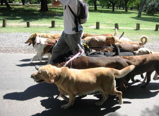 قانون عجیب و غریب در تورینو: سگ ها را به پیاده روی ببرید