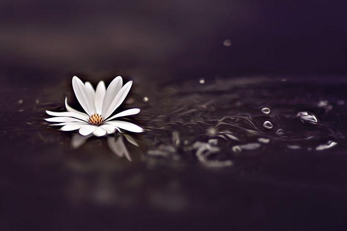 عکس های خیره کننده ماکرو از گل های زیبای بهاری