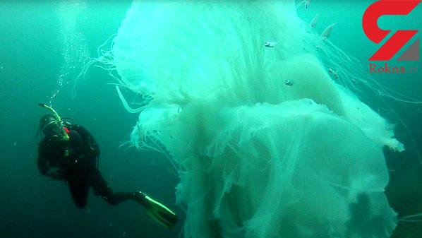 عکسی شگفت انگیز از برخورد یک غواص با عروس دریایی غول پیکر و زیبا