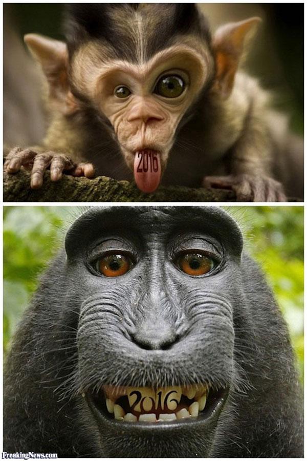 عکس های خنده دار، خنده دارترین عکس های حیوانات، حیوانات بامزه، تصاویر خنده دار و باحال از حیوانات 2017