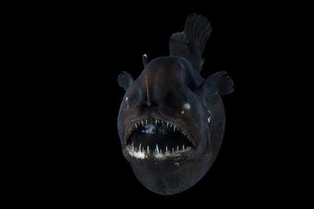 ماهی گیر ماهی