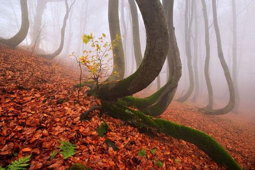عکس های شگفت انگیز از طبیعت پاییزی