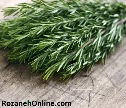 در مورد فواید گیاه رزماری بیشتر بدانید