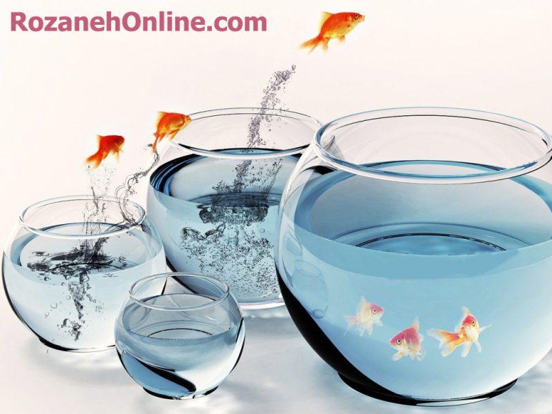 ماهی هفت سین و نکات نگهداریش