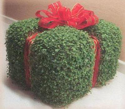 سبزه مدل جعبه کادویی ، بسیار شیک و حرفه ای