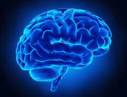 ضعیف شدن مغز با این مواد غذایی