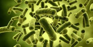 پروبیوتیکها چه تاثیری در کاهش وزن دارند؟