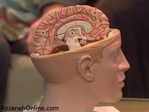 جوان شدن مغز با برخی ترفندها