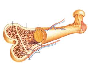 تاثیر درمان های ضد التهاب بر استخوان