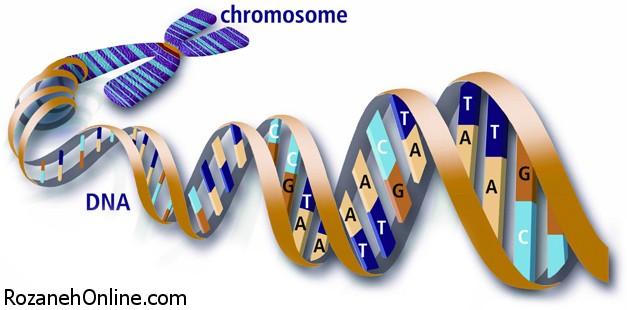 نقش ژنتیک در بیماریهای روانی و توانایی هوشی