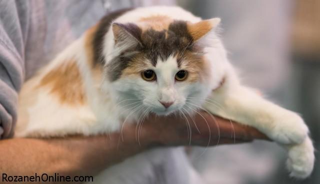 ابتلا به اختلالات دوقطبی با گربه خانگی
