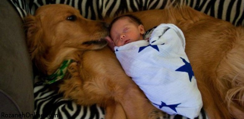 خارج کردن نوزاد از سطل زباله با کمک یک سگ