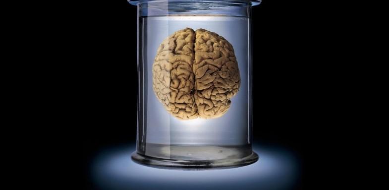 ارتباط حجم مغز و بهره هوشی