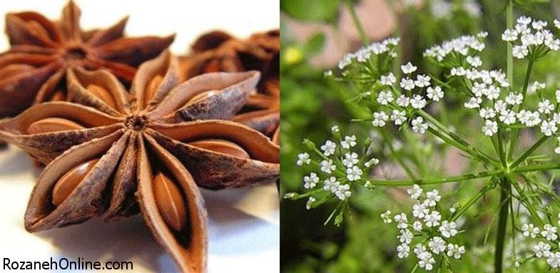آشنایی با ویژگی های درمانی گیاه انیسون