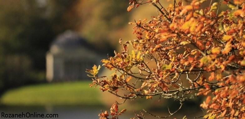 پاییز و مواجهه با سرماخوردگی و آنفلوآنزا