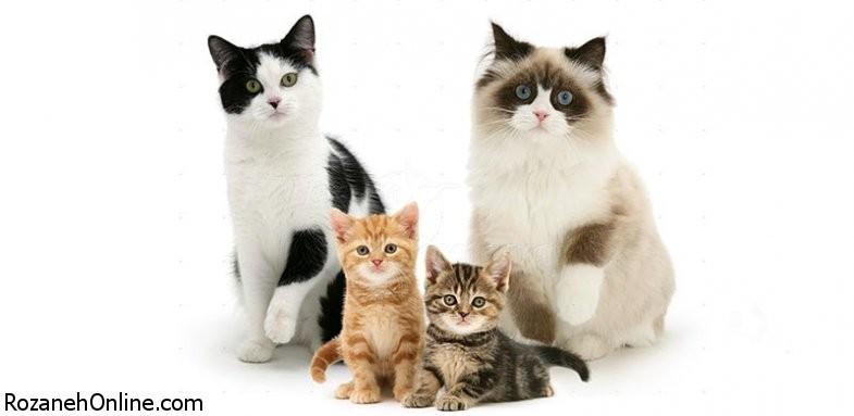 خطرات نگهداری از گربه