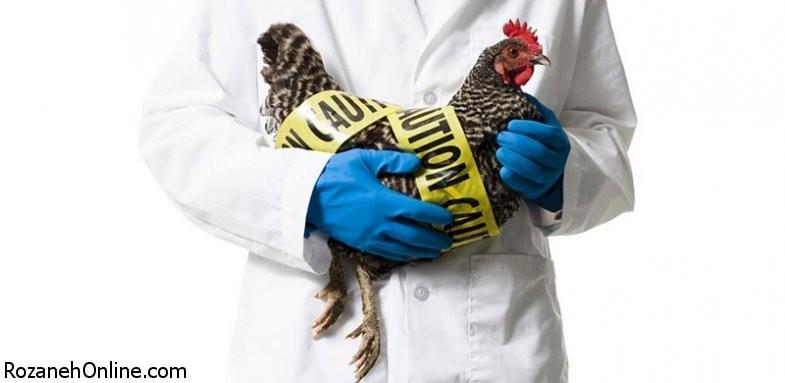 در مورد آنفلوآنزای پرندگان چه می دانید؟