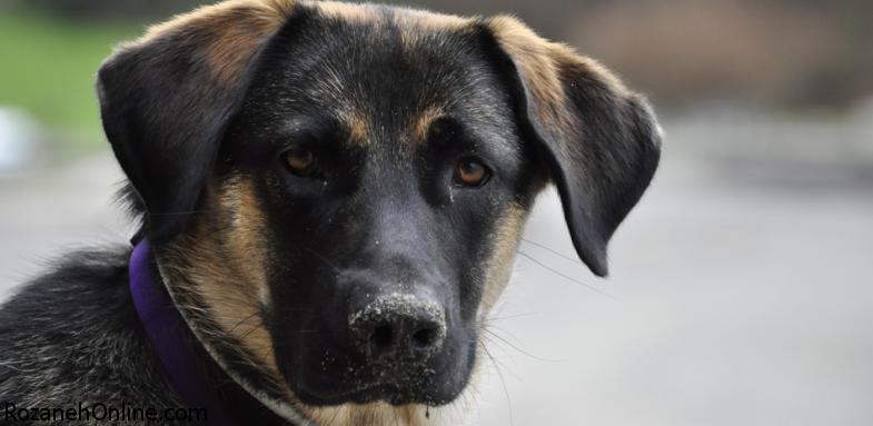 اقدامات اولیه هنگام گزیدگی سگها