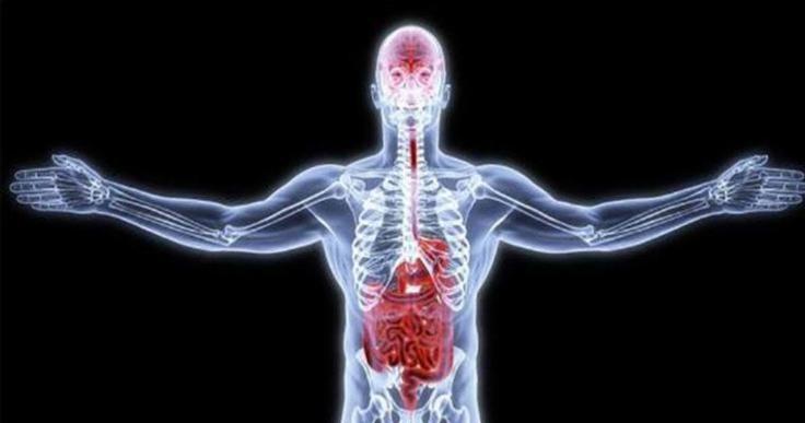 باکتری های خوب روده چه نقشی در بدن ایفا می کنند؟