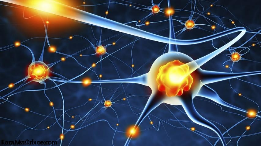 ارتباط بین  سیناپس  و عضله در بوجود آمدن خستگی