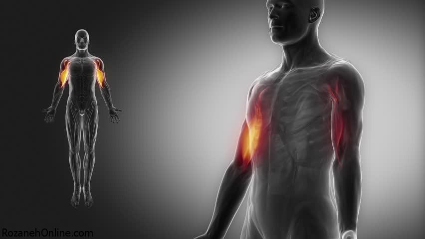 اصول مهم و کلی درباره عضله راست شکمی