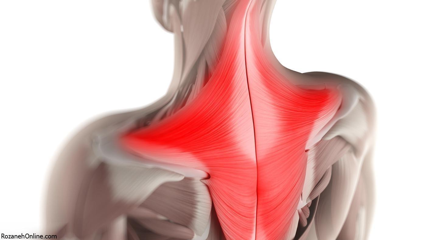 از بدنسازی تا عضلات مهم بدن