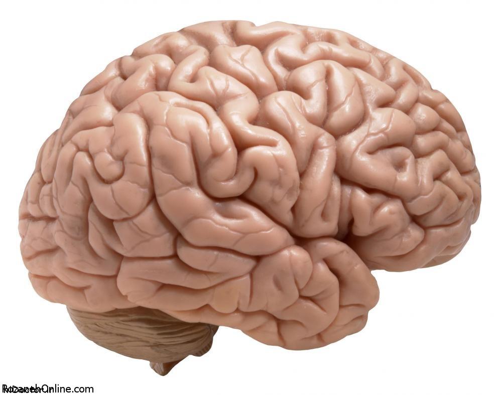 وظیفه حافظه معنایی چیست؟