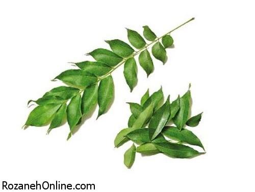 خواص درمانی عصاره درخت نیم