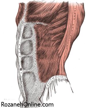 نکاتی درباره بزرگترین عضلات بدن در ورزش بدنسازی