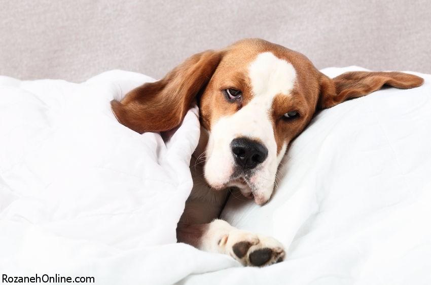 10 درمان خانگی  برای عفونت مثانه در سگ ها