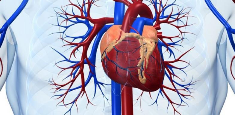 ارتباط مشکلات قلبی با قند خون
