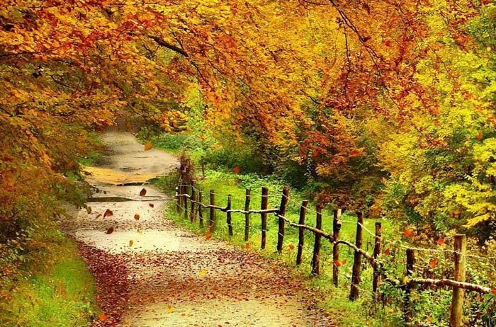 مزایای طبیعت گردی در فصل پاییز