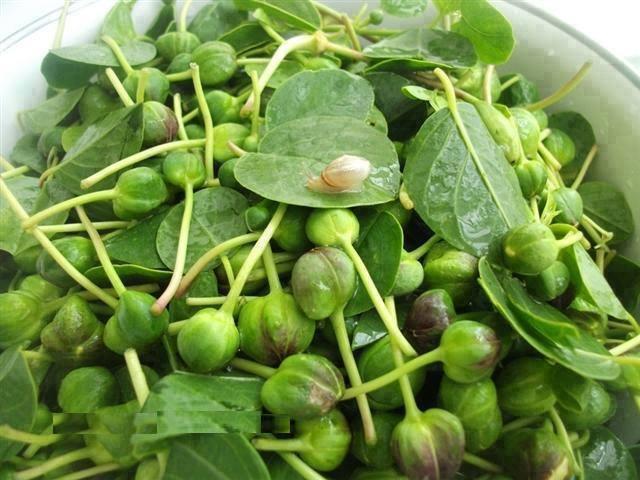 خاصیت های درمانی گیاه کبر