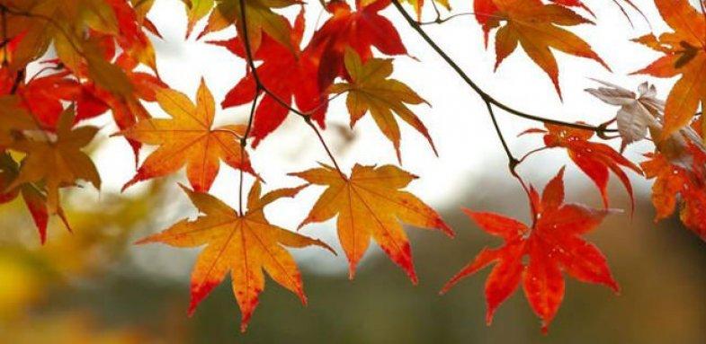 ابتلا به اختلالات تنفسی در فصل پاییز