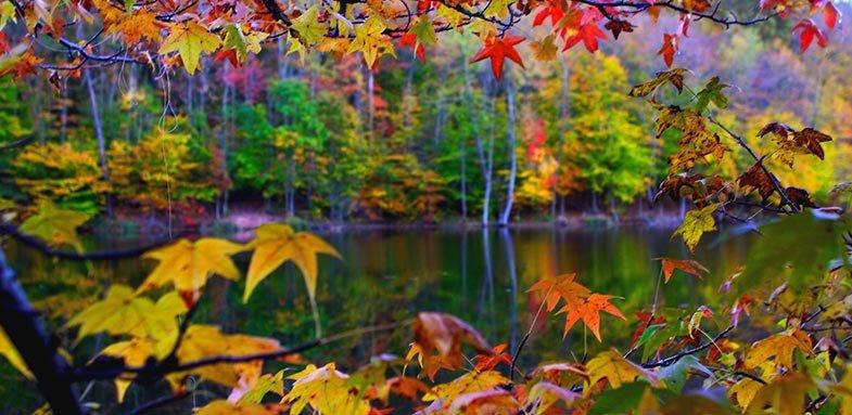 از تنوع رنگ های پاییزی لذت ببرید