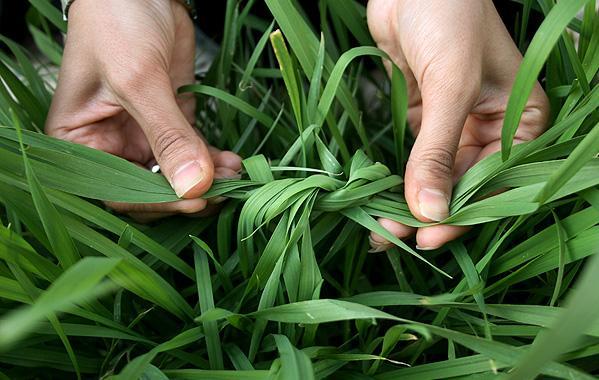 ریشه سیزده بدر و گره زدن سبزه از کجا آمده است؟