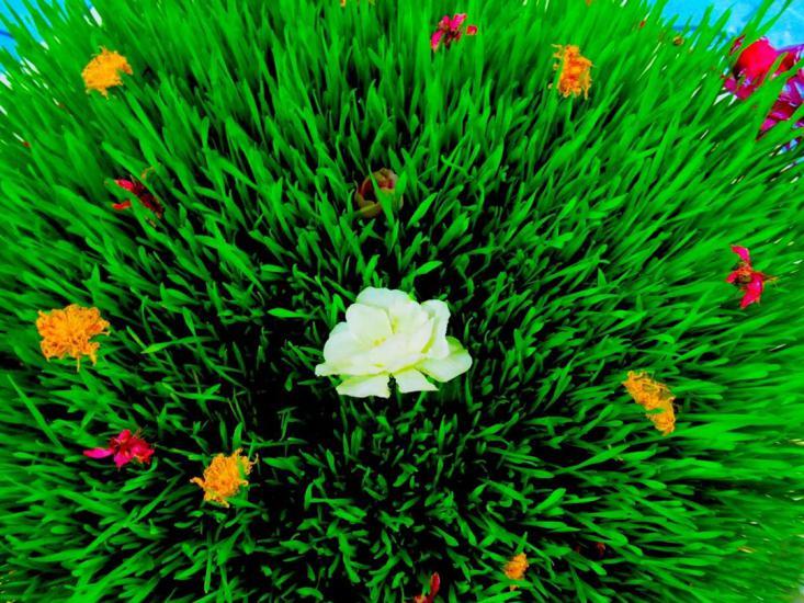 جدیدترین مدل سبزه عید 97 برای خانم های با سلیقه