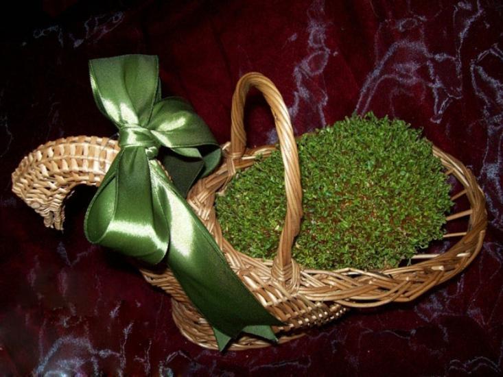 مدل های زیبای سبزه عید نوروز 97 با طرح های متنوع