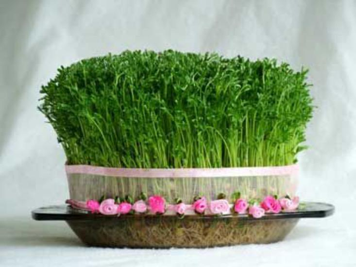 تصاویری از مدل سبزه عید نوروز 97 با طرح های جالب و دیدنی