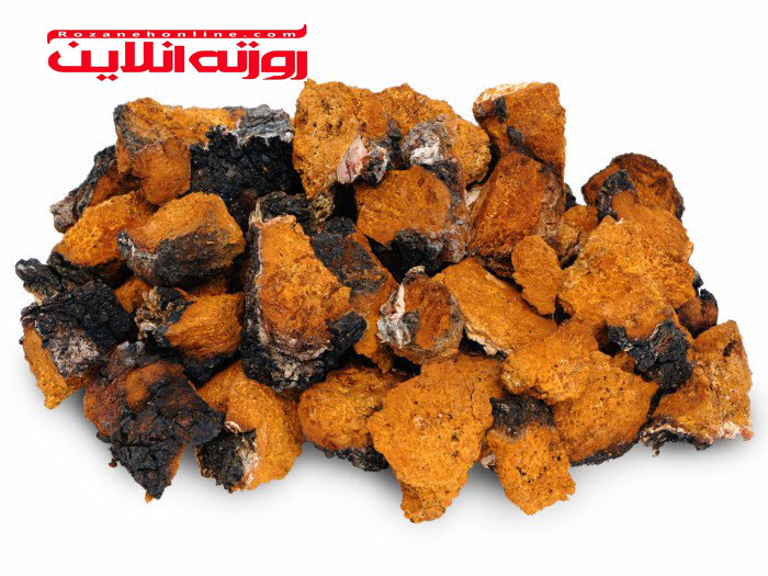 ترکیبات مفید در قارچ چاگا
