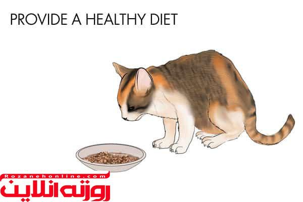 چگونه سیستم ایمنی بدن گربه را تقویت کنیم