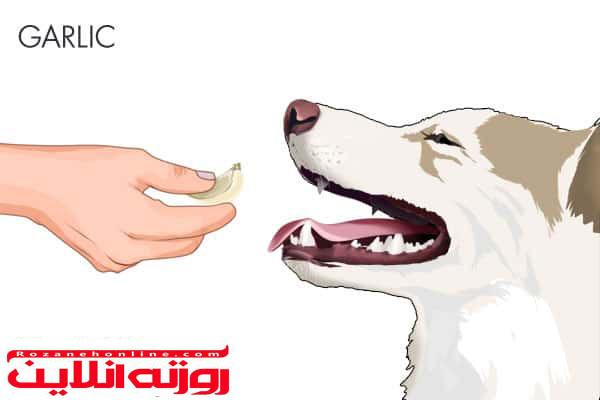 سیر و تخمه کدو تنبل درمان کرم های نواری سگ