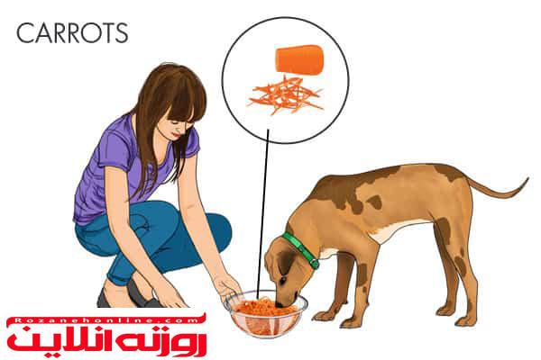 طب سنتی درباره درمان کرم های نواری در سگ ها چه توصیه هایی می کند